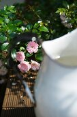 Teilweise sichtbarer Vintage Metall Krug vor blühendem Rosenbusch