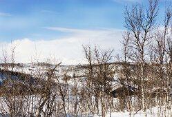 Winterlandschaft - hinter Bäumen kleine Holzhaussiedlung