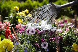 Blumenbeet im Garten gießen