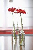 Einzelne Glasflaschen mit roter Gerbera auf Tisch