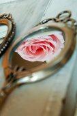 Hellrosa Rosenblüte als Spiegelung in antikem Handspiegel