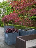 Terrassenbereich mit Outdoorsofa & Fächerahorn in Pflanzkübeln