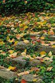 Colourful autumn leaves on rustic stone steps in garden