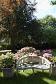Curved garden bench in front of flowering hydrangea bushes