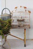 Amphore vor Metall Giesskanne und Vintage Vogelkäfig auf Holzbank an der Wand
