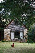 Hen walking through garden of small rustic country house