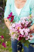 Woman picking garden flowers for bouquet