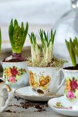 Crocuses and hyacinths in romantic teacups