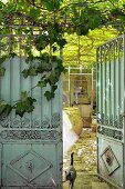 View of cat in courtyard with climber-covered pergola through open vintage metal gate