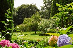Large garden with many trees and bright hydrangea flowers in foreground