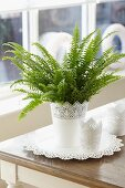 Potted Nephrolepis exaltata 'Green Lady' (sword fern) on table next to window