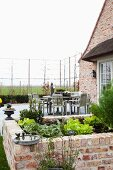 Large dining area on terrace adjoining brick house with immature espalier hedge and brick raised bed of lettuce