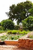 Edible lotus flowers in pond in large garden; low raised bed with ruddy stone wall in foreground to one side
