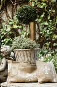 Hand-sewn hessian cushions in front of small lollipop box tree in wicker planter
