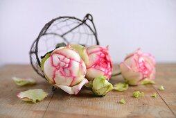 Rosen im Drahtkorb auf Holzuntergrund