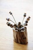 Dried poppy seed heads in hollow log on table