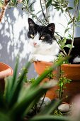 View of cat in terracotta pot seen through leaves
