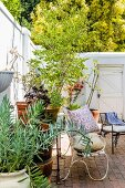Sunny courtyard with potted plants against tall, white walls and delicate, metal bench