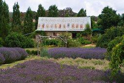 Rustikales Landhaus mit Lavendelfeldern
