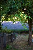 Blick von oben auf teilweise sichtbaren Gartenzaun, dahinter Lavendelfeld
