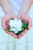 A woman's cupped hands, holding up white apple blossom
