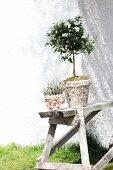 Blühende Pflanzen in Blumentöpfen, mit Muscheln und Kieselsteinen verziert