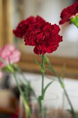 Red carnations in vase