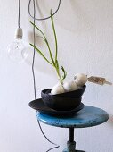 Sprouting onions in black bowls on vintage swivel stool