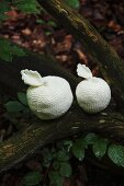 White, crocheted apples on tree trunk in woodland