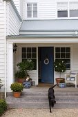 Elegant entrance area with Labrador of a white wooden house