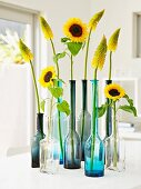 Single sunflowers and yellow red-hot pokers in glass bottles
