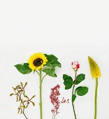 Orchid, sunflower, pepper berries, rose & red hot poker against white background