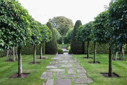 Avenue of trees lining paved path and topiary box trees in English garden