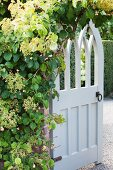 Open, wooden garden gate painted white in climber-covered brick wall
