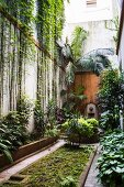 Narrow courtyard in Buenos Aires with jungle-style planting
