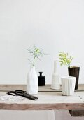 Single flower stems (Nigella damascena) in white and black vases on minimalist-style, rustic wooden table