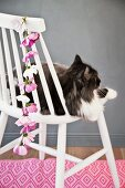 Cat sitting on white chair with garland of cosmos on backrest