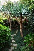 Irregular concrete stepping stones leading between yuccas in Australian garden