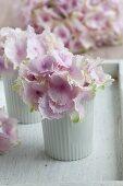Pink hydrangeas in white beakers