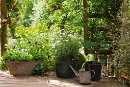Planters on wooden deck in front of summery garden