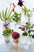 Tropical flowers in various vases