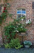 Ferns and vintage planters against brick facade of former stable with original windows