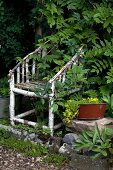 Garden chair hand-crafted from birch branches overgrown by surrounding plants