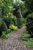 Path in mature, natural-style garden