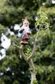 Garden gnome on pruned branch of contorted willow