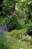 Purple-flowering plants in garden