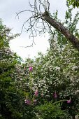 Flowering foxgloves, group of white-flowering shrubs and tree trunk