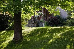 Lawn under shady horse chestnut canopy in front of rustic house