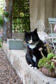 Cat sitting on low concrete wall edging veranda