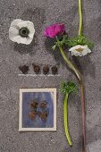 Anemones of different colours and small tubers on stone slab